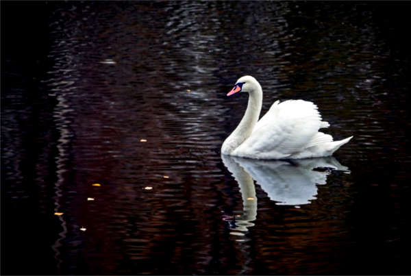 Black Swan in der Immobilienbranche