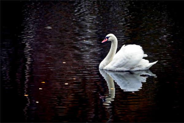 Black Swan in der Immobilienbranche