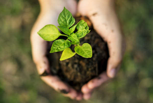Nachhaltige Geldanlagen - Rendite mit gutem Gewissen